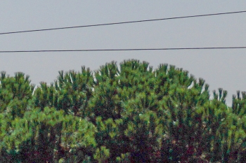 En zoom 100%, on constate un bruit très marqué