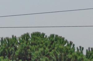 En zoom 100%, le bruit est beaucoup moins marqué.